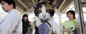 Tama the cat station master