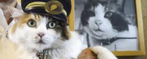 Nitama the new cat station master