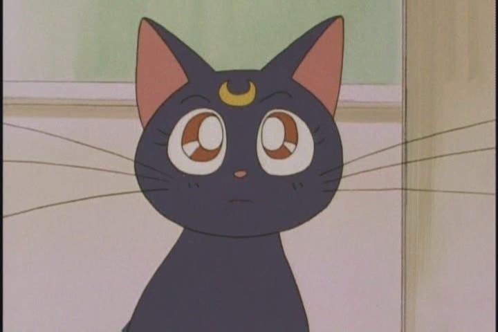 top 6 popular and adorable anime pets in history
