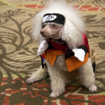 AnimeFest 2016 Cosplay Day 2&3 - Naruto (Sammy The Cosplaying Dog)