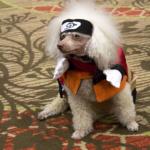 AnimeFest 2016 Cosplay Day 2&3 - Naruto (Sammy The Cosplaying Dog)