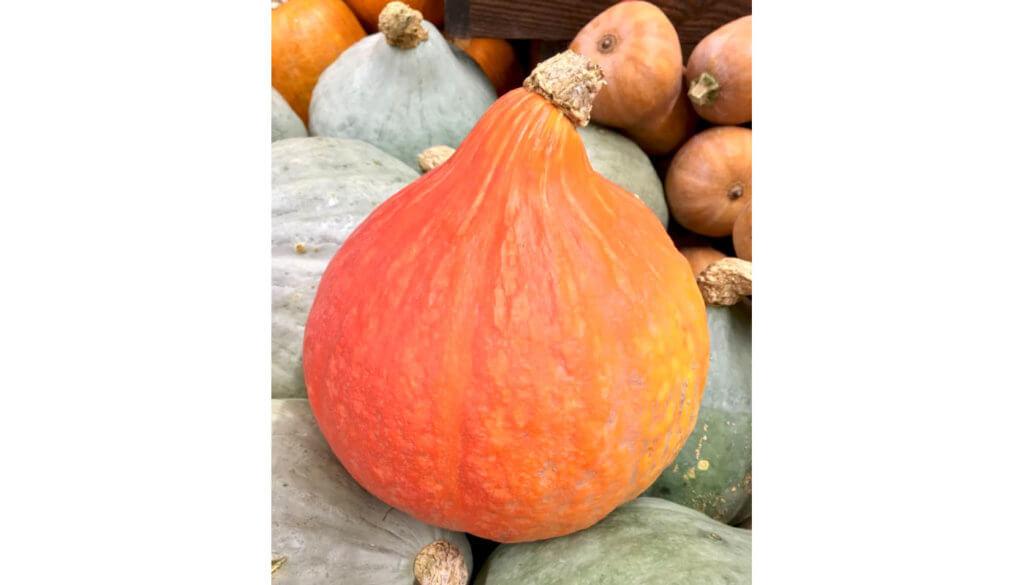 Hokkaido pumpkin aka red kuri squash